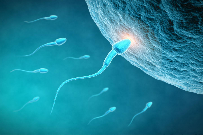 γονιμότητα