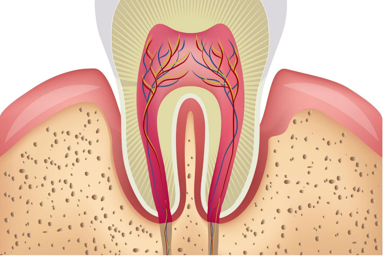 δοντιών