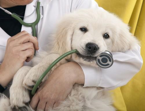 Λεϊσμανίαση: Μην ξενχάτε να ελέγχετε το σκύλο σας κάθε φθινόπωρο