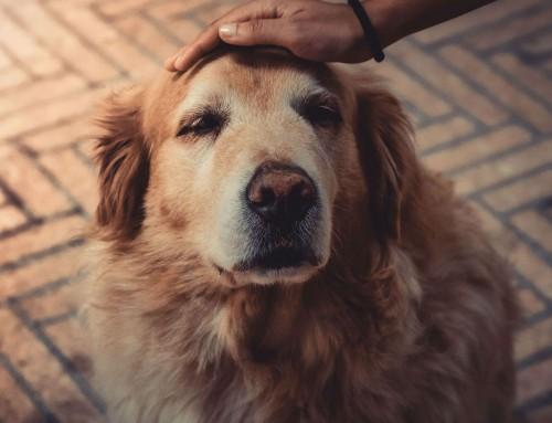 Σκύλος: Μερικά συνηθισμένα συμπτώματα που προβληματίζουν