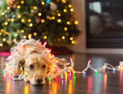 Προστατέψτε τα κατοικίδια σας από τα απρόοπτα των Χριστουγέννων